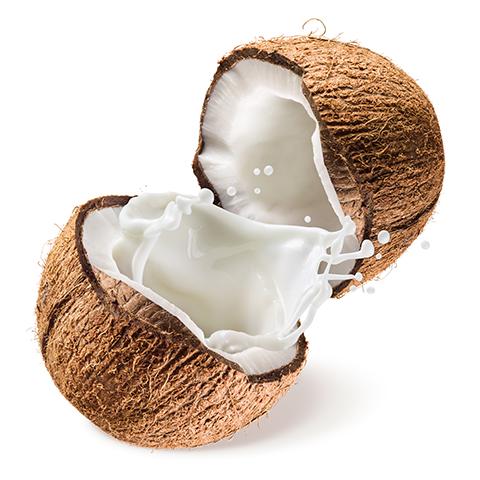 MSCPI-Coconut-Milk-and-Cream